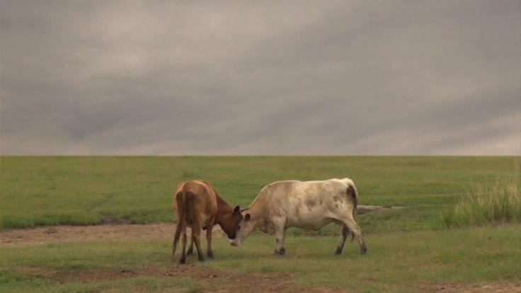А. Митлянская.2014 видео